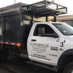 EC Tree Service About